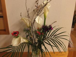 今日の花 啓翁桜、カラー、spカーネ、アネモネ