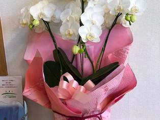 今日の花 コチョウラン(お祝いにいただきました!)