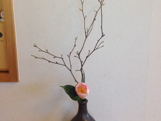 今日の花 ツバキ(西王母)モモ