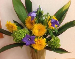 今日の花 ヒマワリ アナベル キキョウ、ドラセナ
