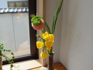 今日の花 ラナンキュラス フリージア