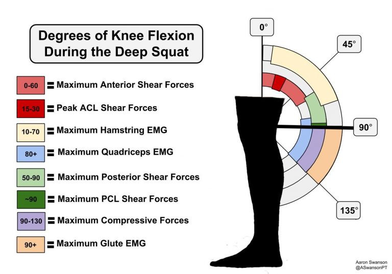 Different squat depth and their forces