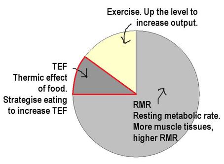 How To Really Lose Weight - Thermic Effect of Food (Part 3/5)