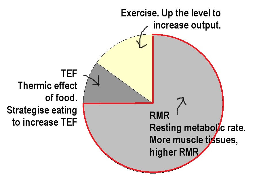 Resting Metabolic Rate (RMR) accounts for the greatest impact on energy expenditure. Look for ways to increase this area if you want to lose weight and keep it off.