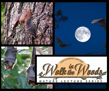 Bats walk in the woods_edited.jpg