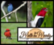 Birds Walk in The Woods.png