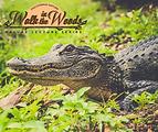 Alligator walk in woods Oct.png