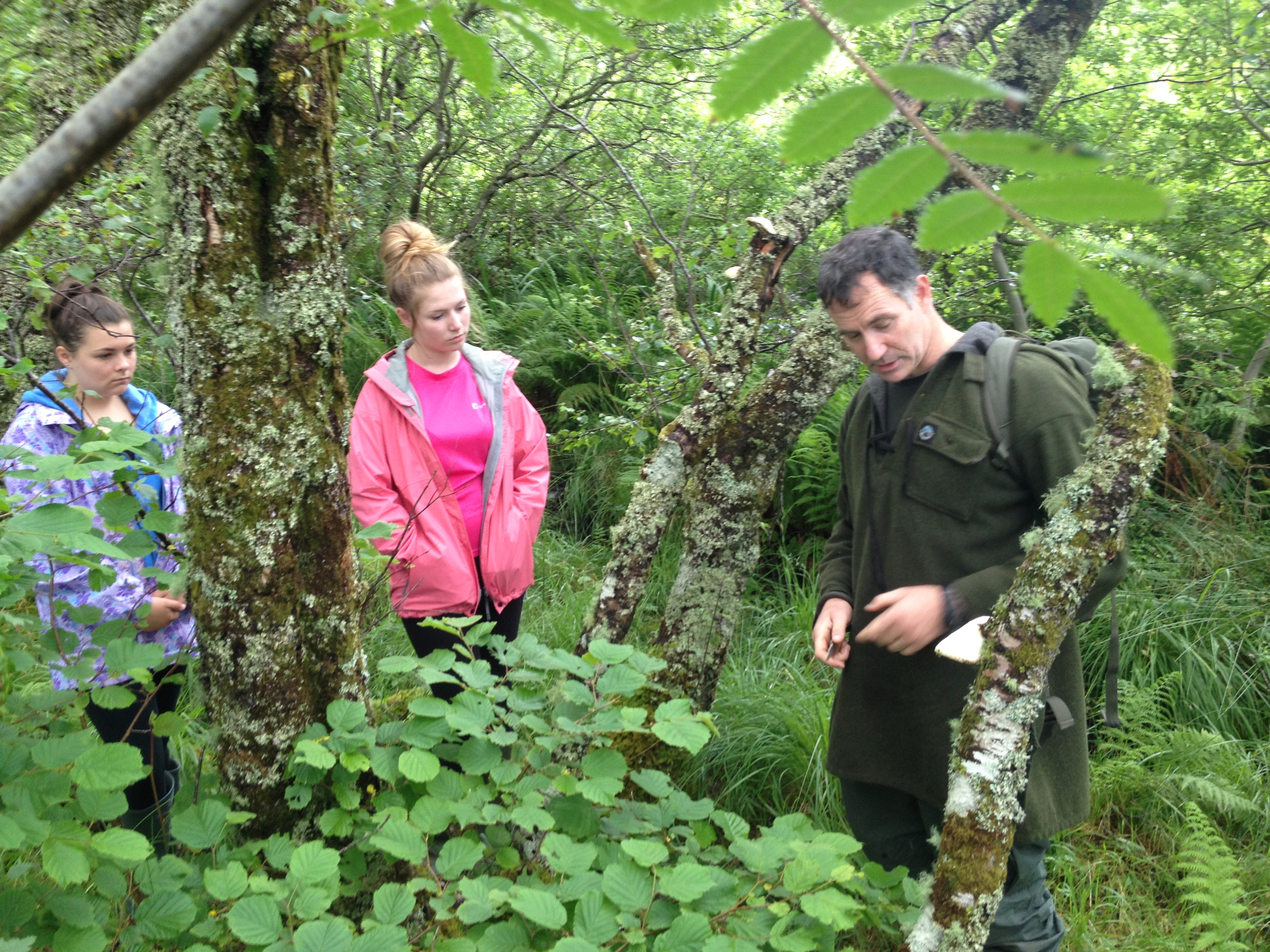 expert guide woodland nature day