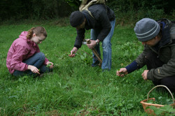 Foraging on a Survival Course