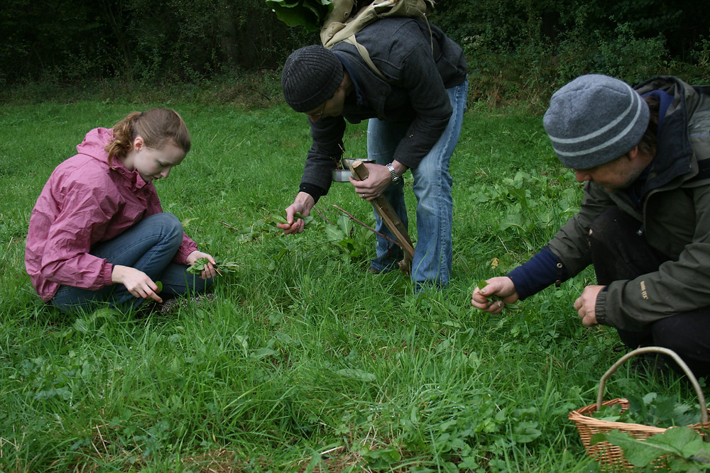 Foragers in a field