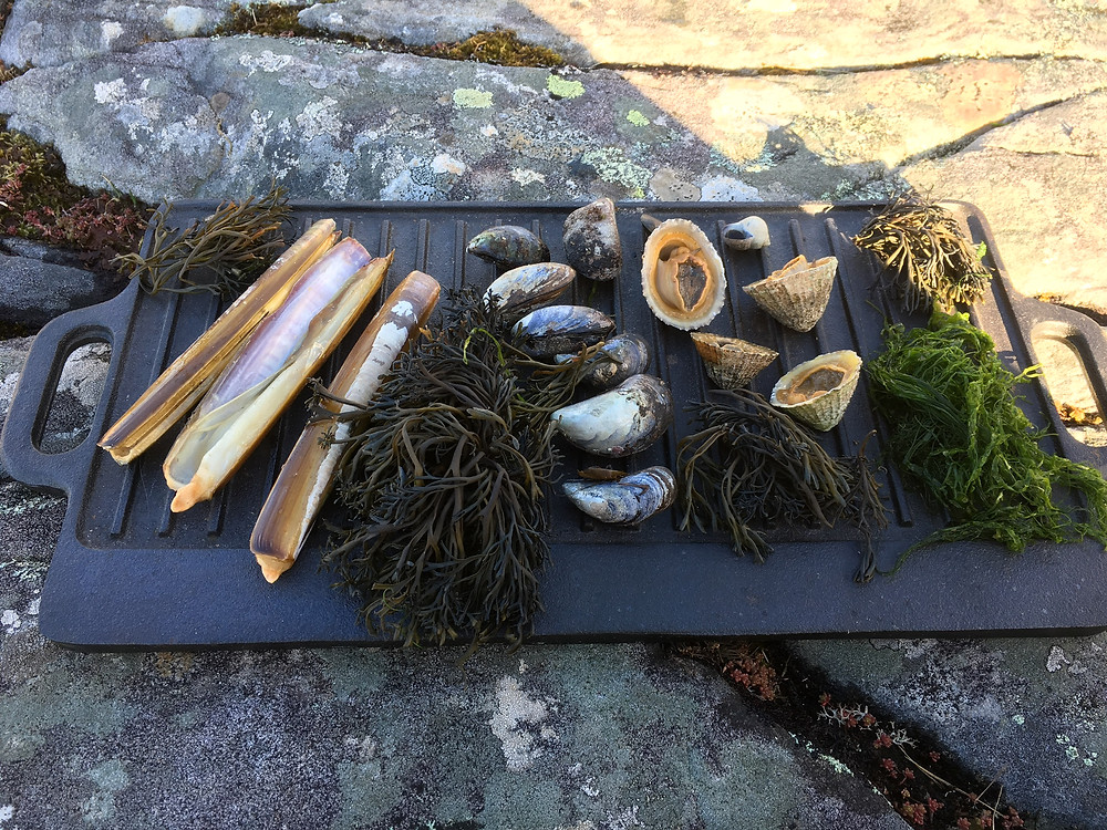 coastal foraged fare - razor clams, channelled wrack, mussels, limpets, gutweed