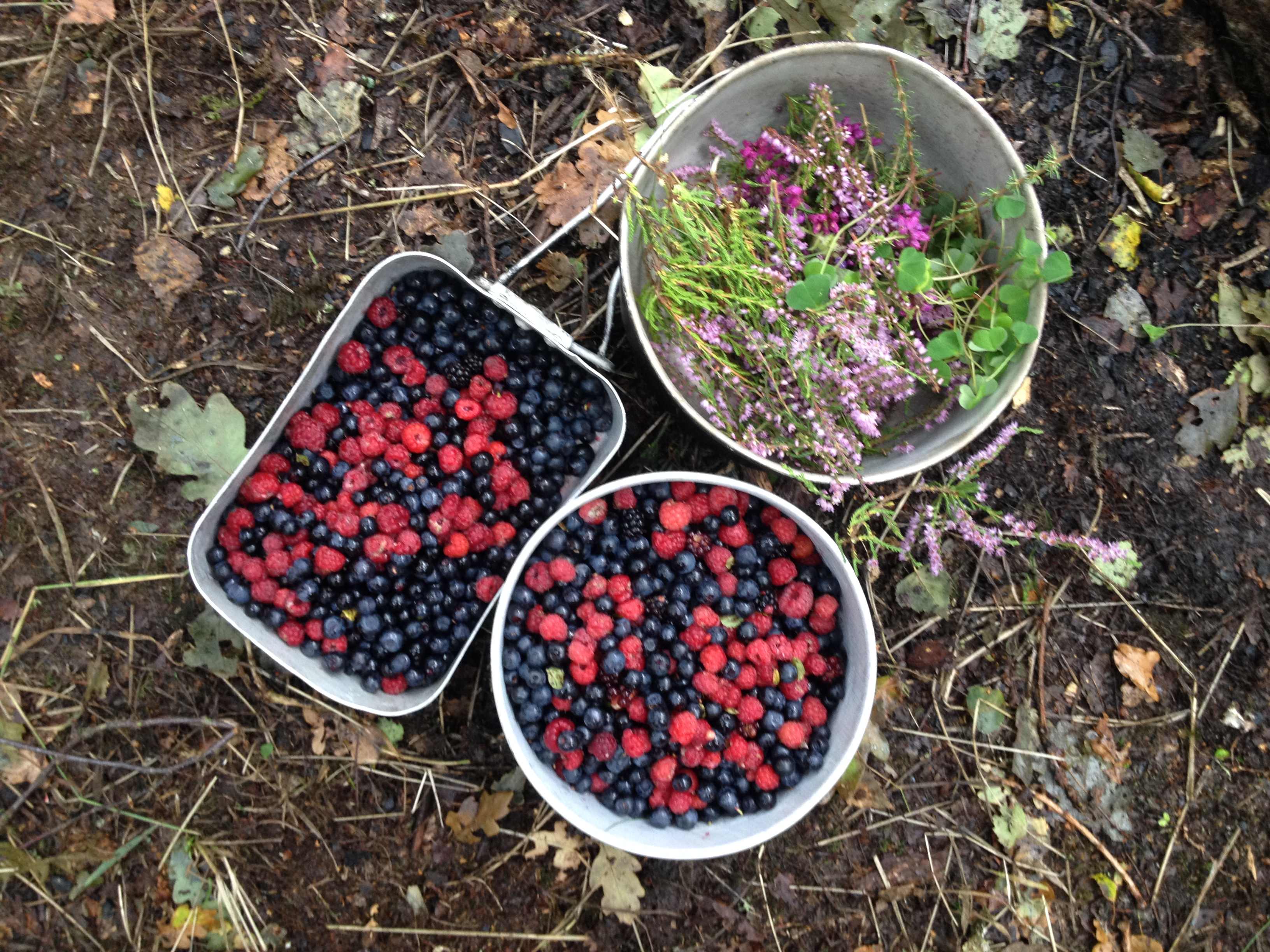 wild food foraging day course Sussex