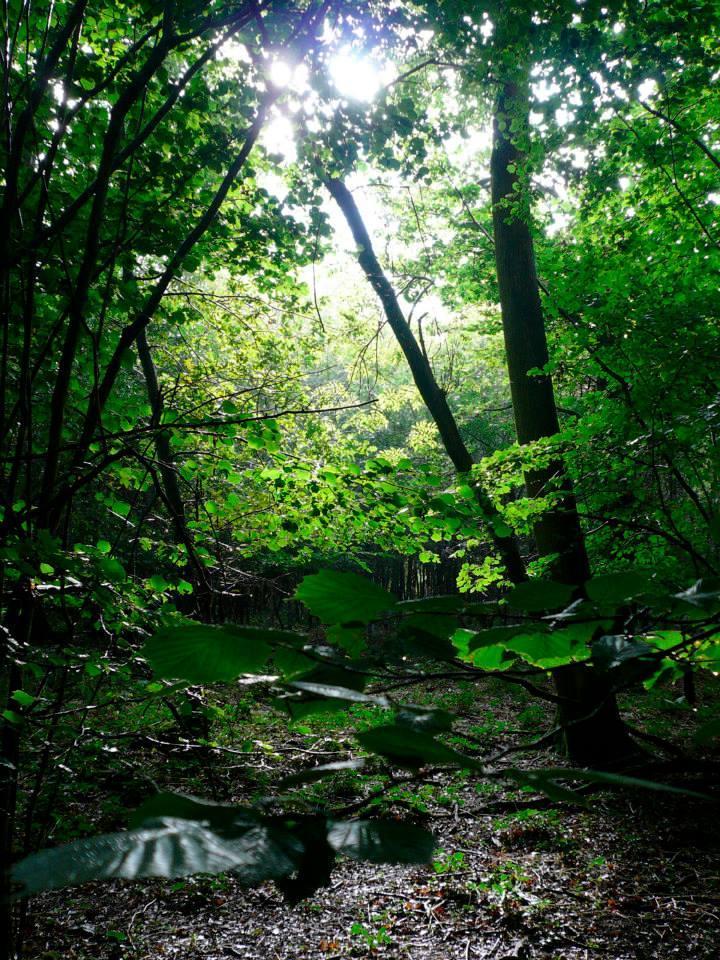 Family Bushcraft Woodland Experience