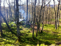 Woodland setting for a Survival Day