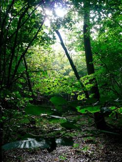 UK Woodland Nature Consultant TV