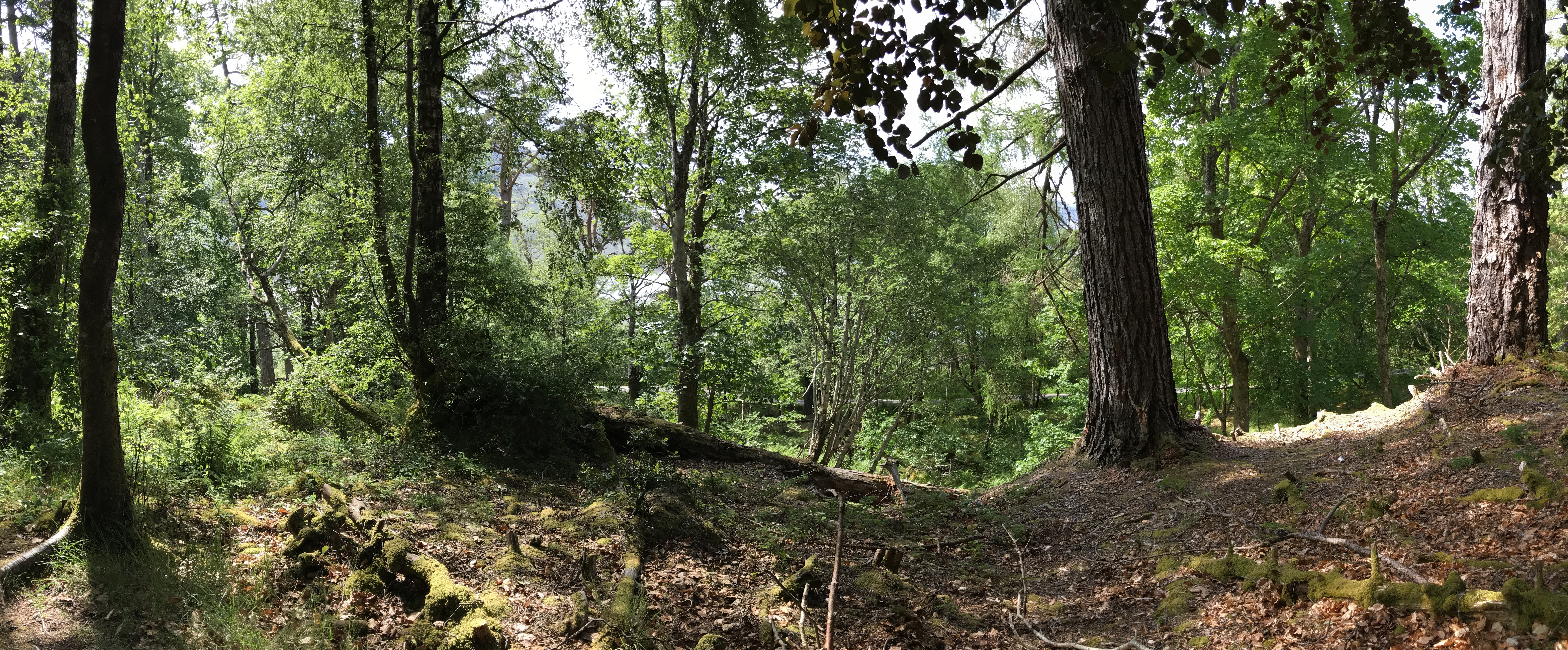 Scottish woodland private guide day