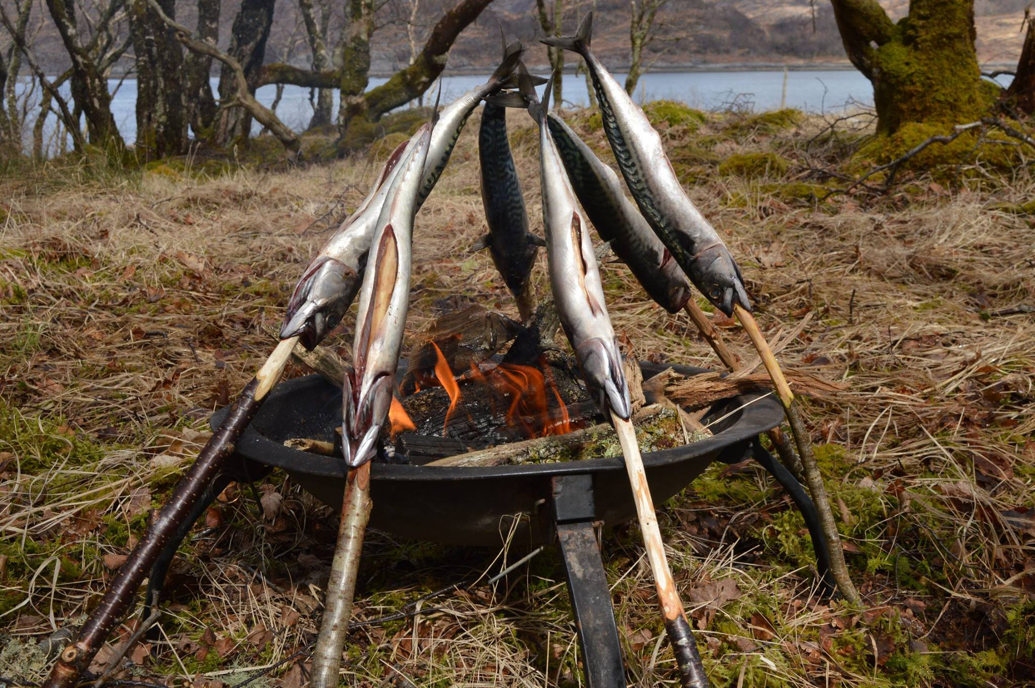 wild food bushcraft scotland