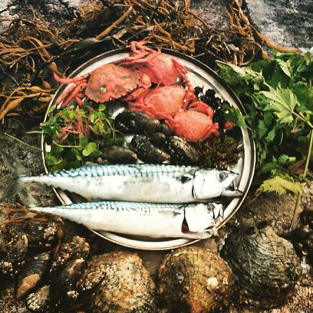 Coastal foraging in Moidart www