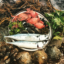 Coastal foraging in Moidart www.wildwood