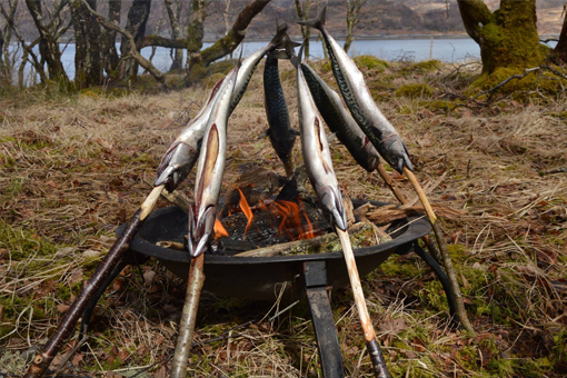 Cook mackerel on campfire wild food
