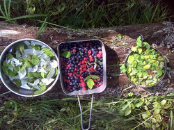 foraged berries private guide nature
