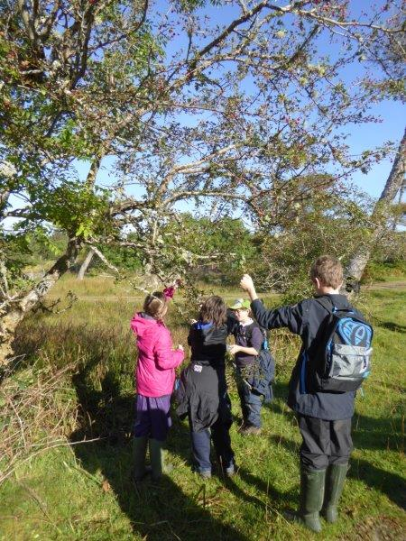 wild food foraging course Scotland