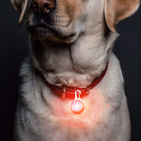 (USB Rechargeable) LED Dog Safety Light