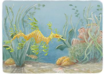 Leafy Sea Dragon.jpg