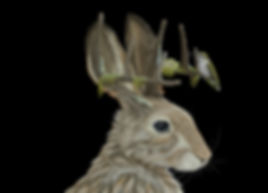 Jackalope_48x32_June15_V1_edited.jpg