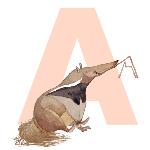 Alphabet Animals A - L