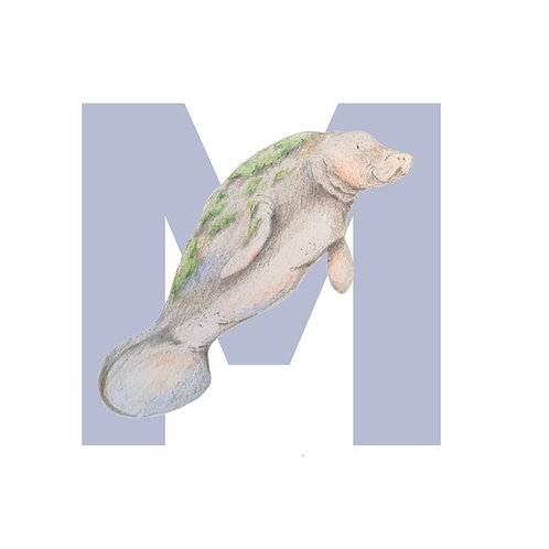 Alphabet Animals M - Z