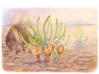 Desert Porcupine