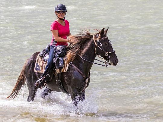 Gently Used Horse Saddles   Warrenton, VA   The Galloping Grape