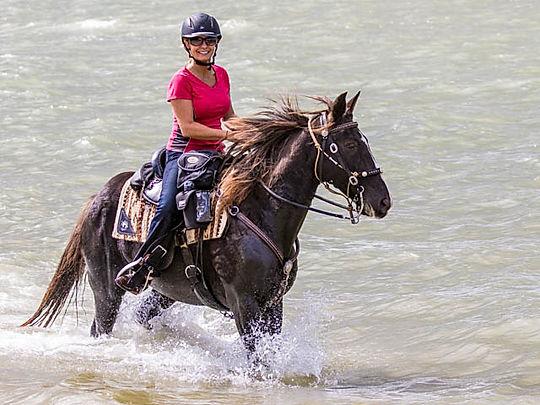 Gently Used Horse Saddles | Warrenton, VA | The Galloping Grape