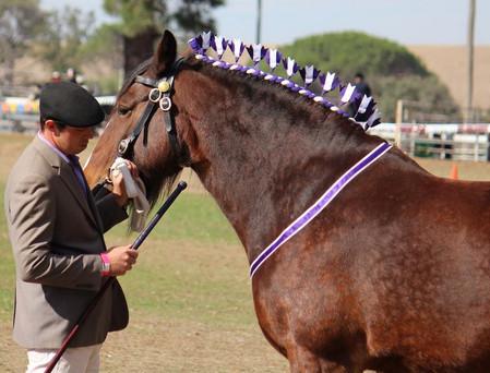 heavy-horse-decorations2.jpg