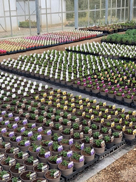 Bedding Plants Coming Soon