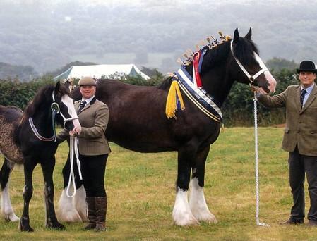 heavy-horse-decorations4.jpg