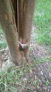 Squirrel freed with Dawn liquid soap