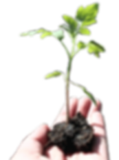 Mike Lang Plant in hand