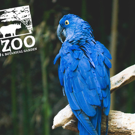 Zoo helping to make neighbors more energy efficient