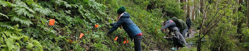 Mount Sutro Stewardship Volunteers