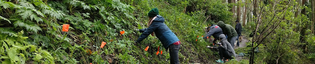 Mount Sutro Stewardship Volunteers