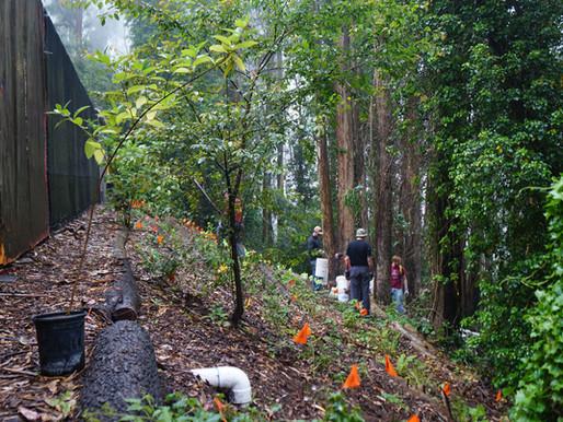 Rainwater Catchment & Rain Garden