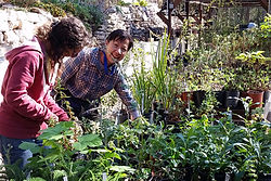 Volunteer at the Mount Sutro Native Plant Nursery and propgate plants with Sutro Stewards