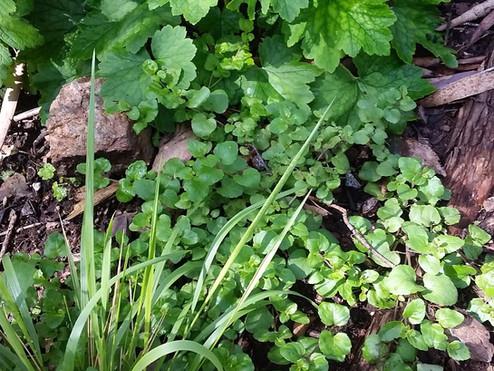 Rain, Rain, It's Planting Season