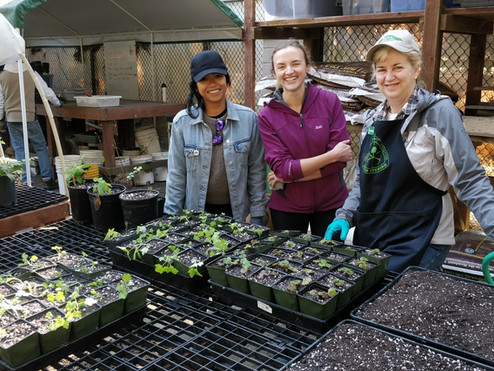 Mt. Sutro Native Plant Nursery Needs You!