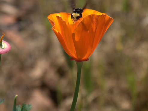Pollinators: All They Need is a Little Love