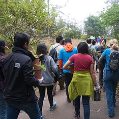 Sutro Stewards volunteers take plants to restoration site on Mount Sutro