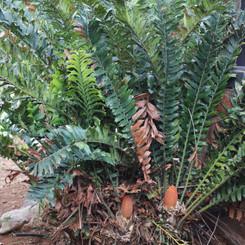 Plants & Trees