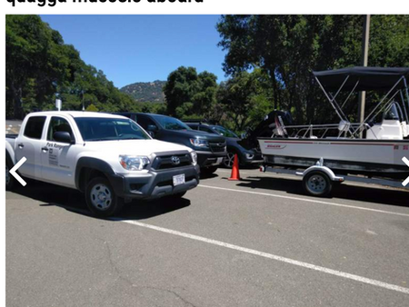 Mussels Detected at Lake Mendocino and in the news!